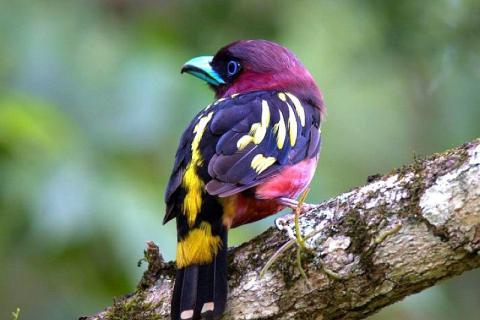 thailand-animals-birds-exotic-upscaled-2796462-480x320.jpg