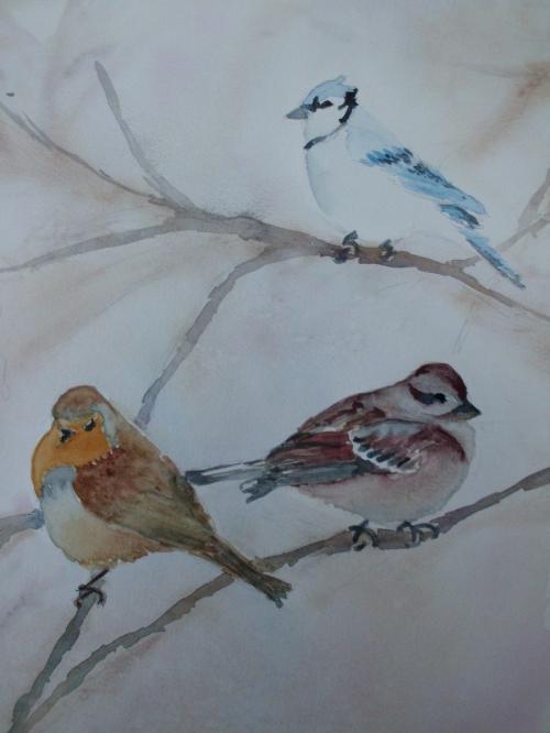 défi oiseaux.JPG