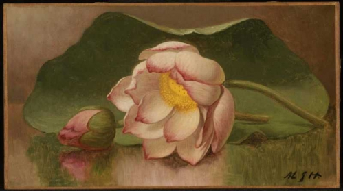 Lotus_Blossom_%2F_Water_Lily.jpg