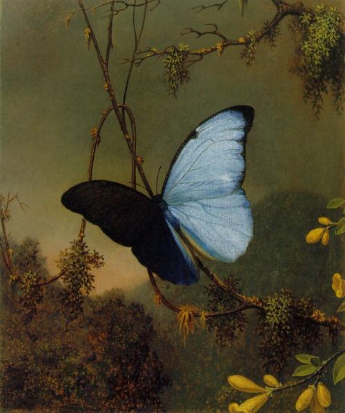 Blue_Morpho_Butterfly.jpg