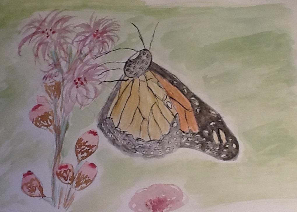 papillon Carmen.jpg