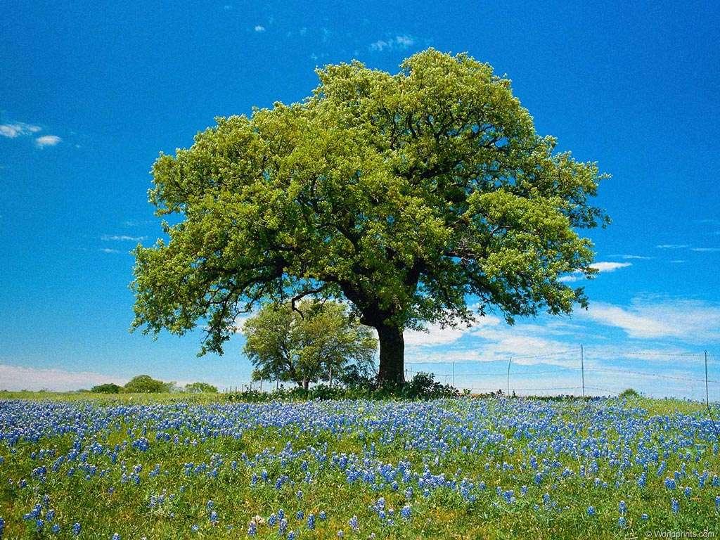 arbre_au_milieu_d_une_prairie.36980.jpg