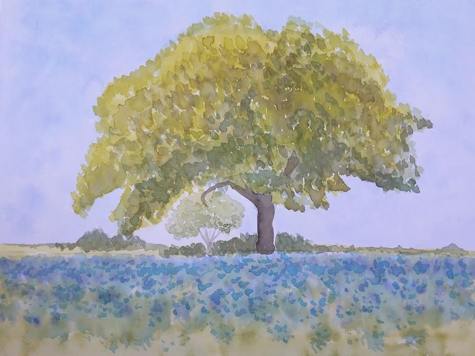 Etude d'un arbre -.jpg