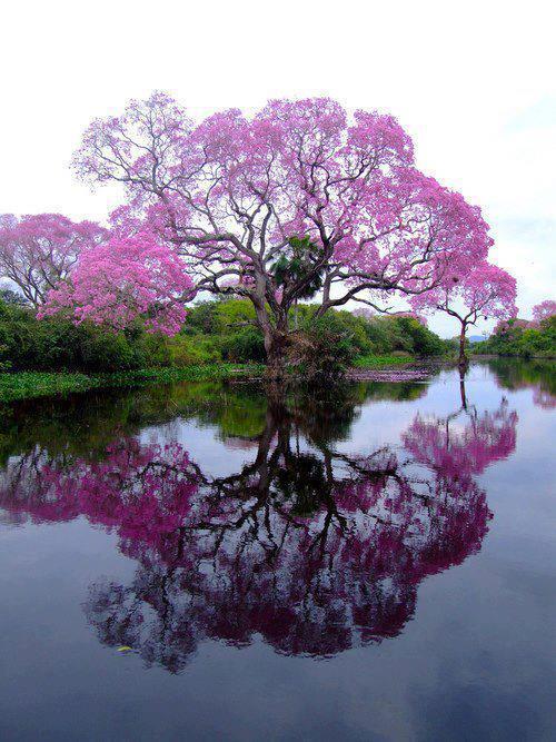 bonjour-paysage-reflet-d-eau-violet_imagesia-com_3o8n.jpg