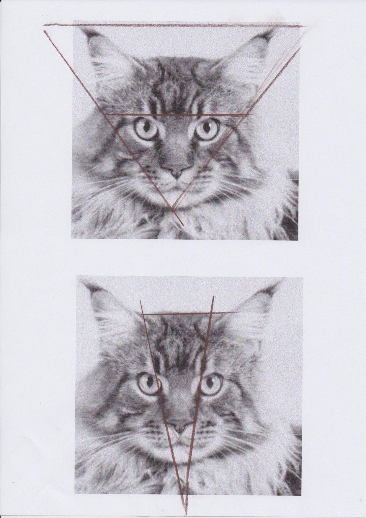 chat triangle corrigé.jpg