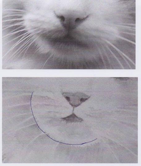 chat corrigé menton.jpg