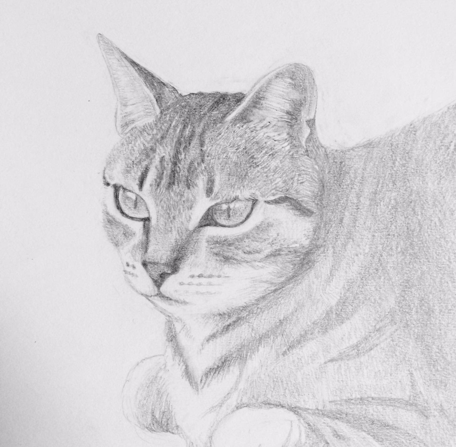 chat ambre.jpg