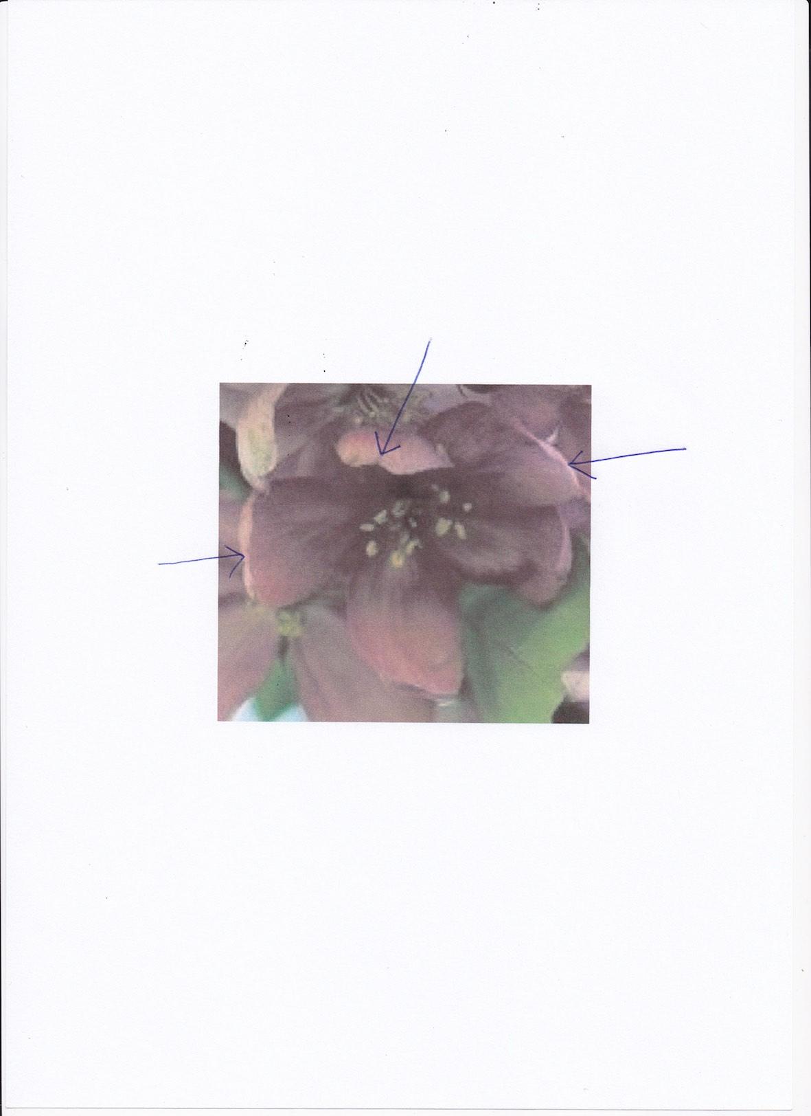 fleurs forme lumière_0001.jpg