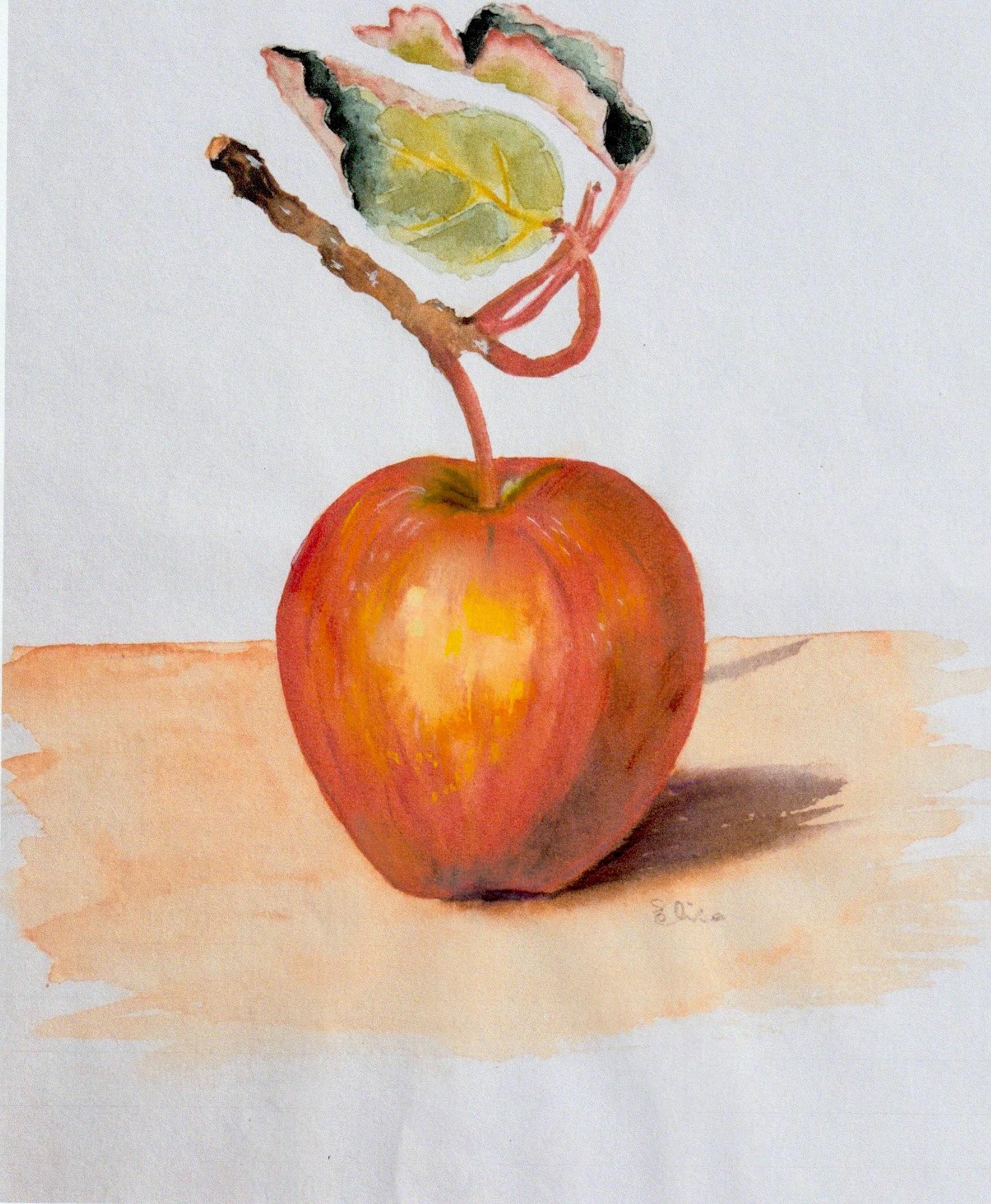corrigé pomme.jpeg
