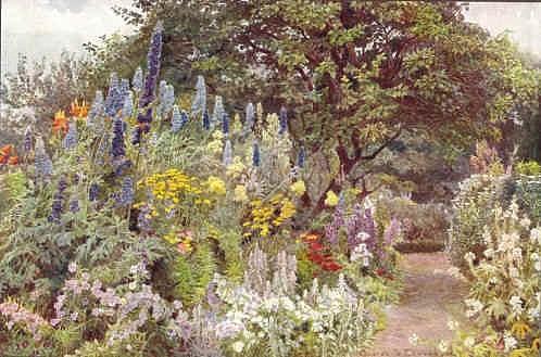 delphinum-george-elgood-gertrude-jekyll-1904-8.jpg
