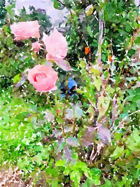 Waterlogue-2018-10-24-18-11-37.jpg
