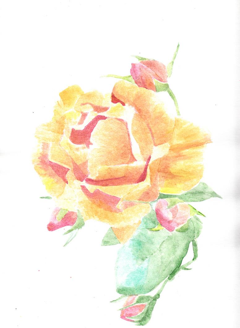 Rose jaune aqua.jpg