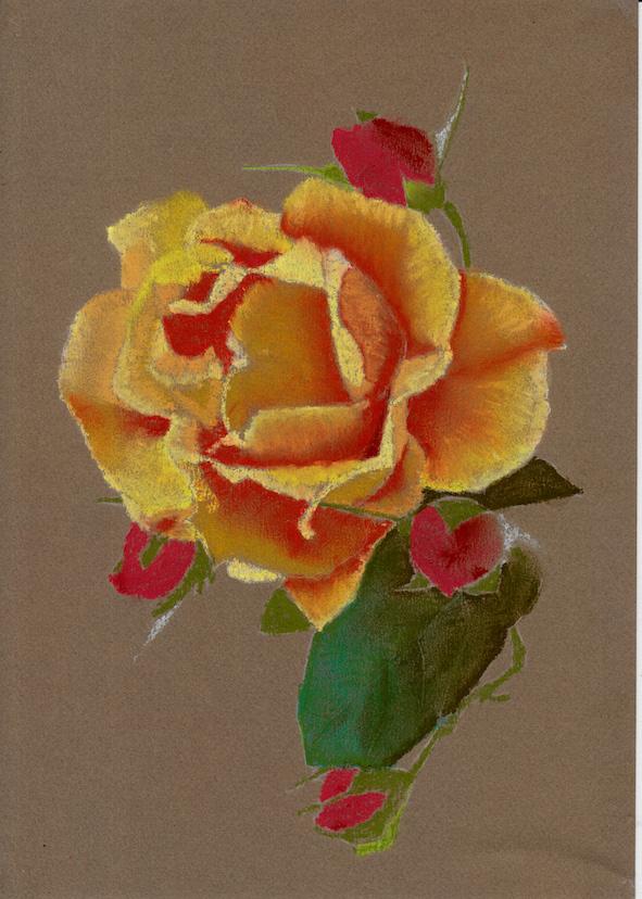 Rose jaune pastel.jpg