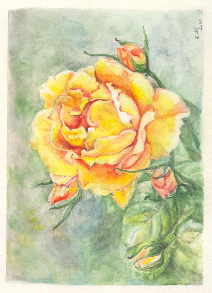 rose trinh.jpg
