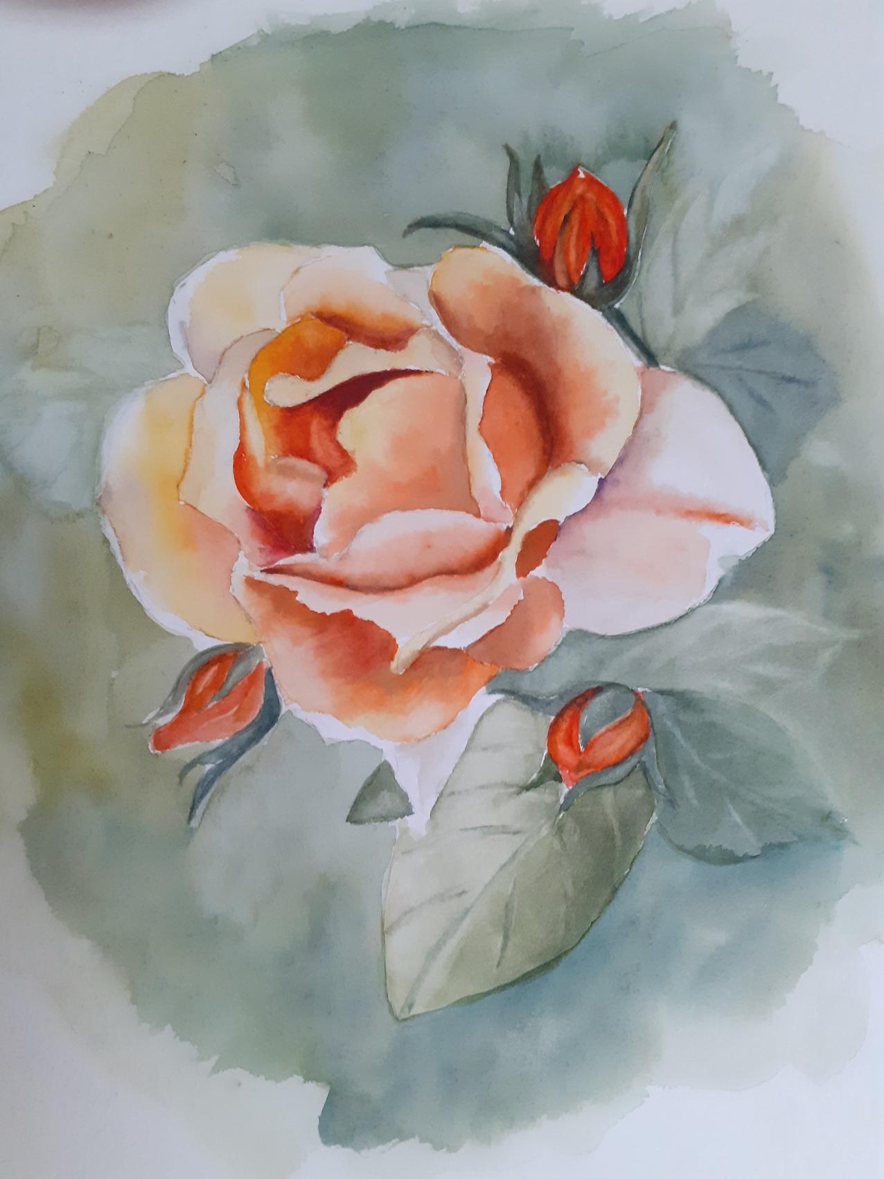 rose silhou.jpg