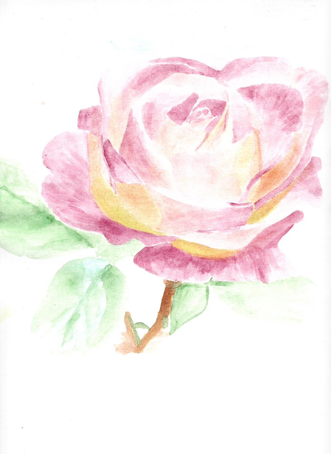 Rose rose aqua.jpg