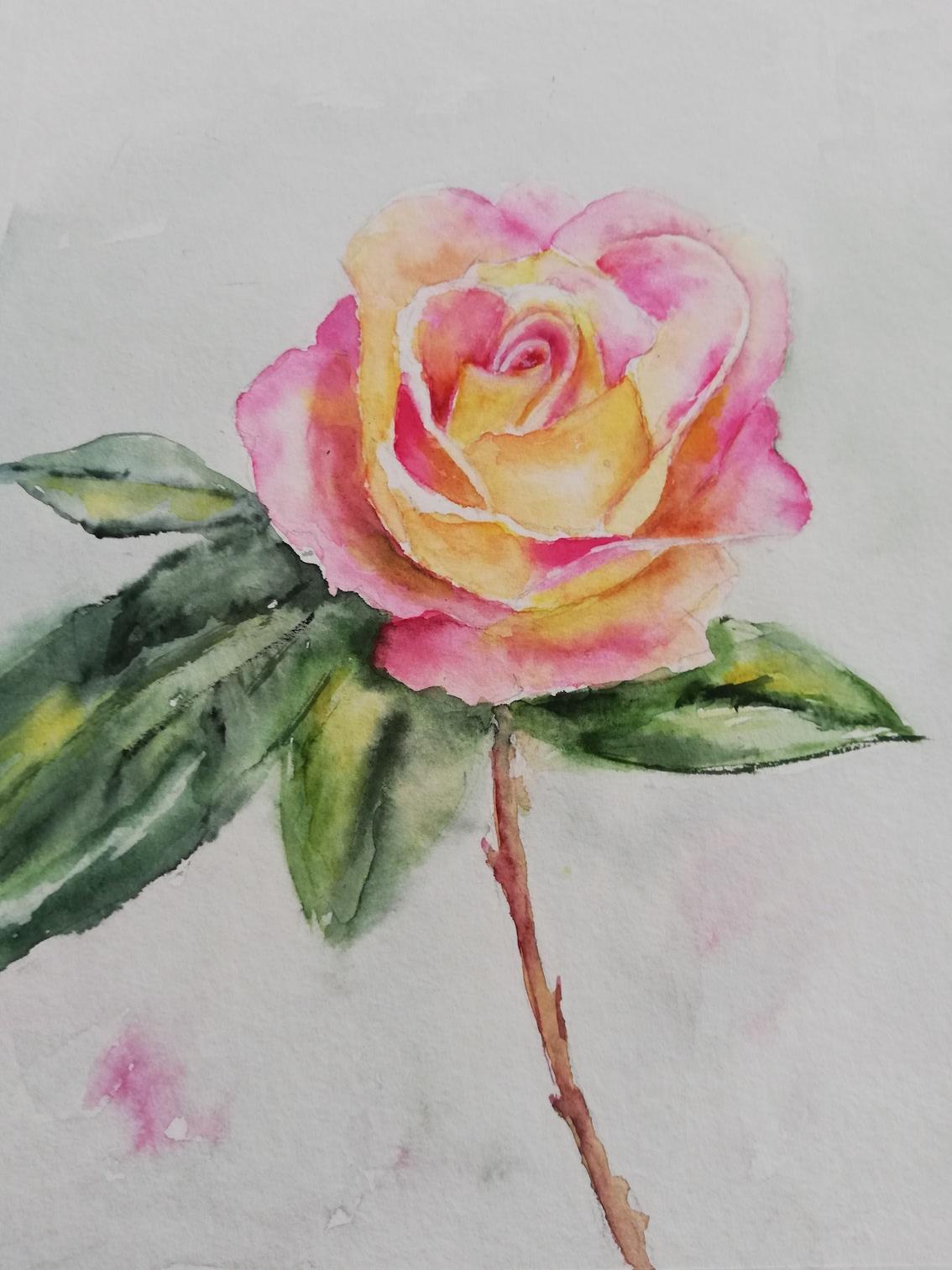 rose brindi 2.jpg