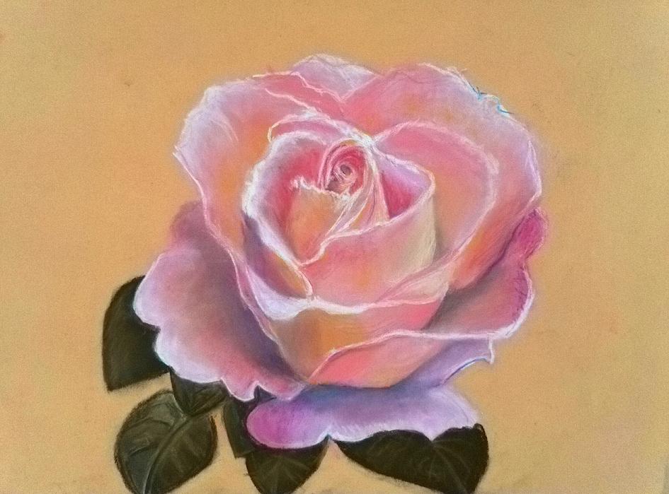 ROSE2couleur.jpg