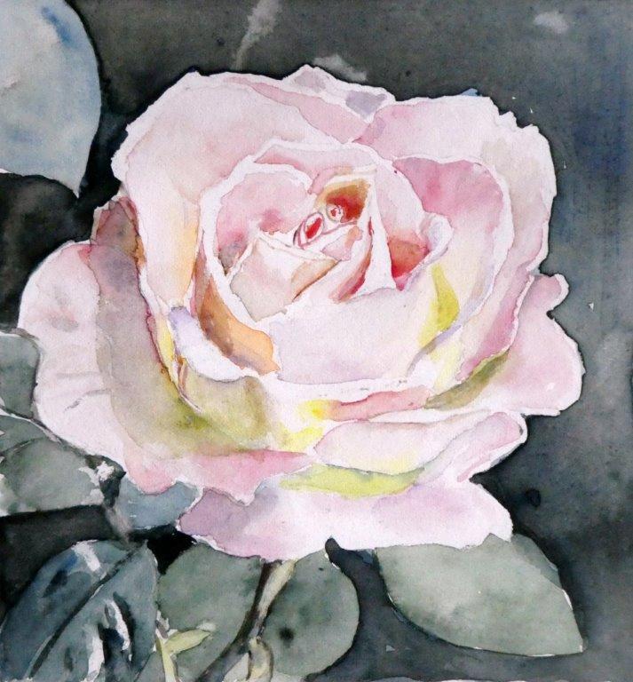 Rose 002.jpg