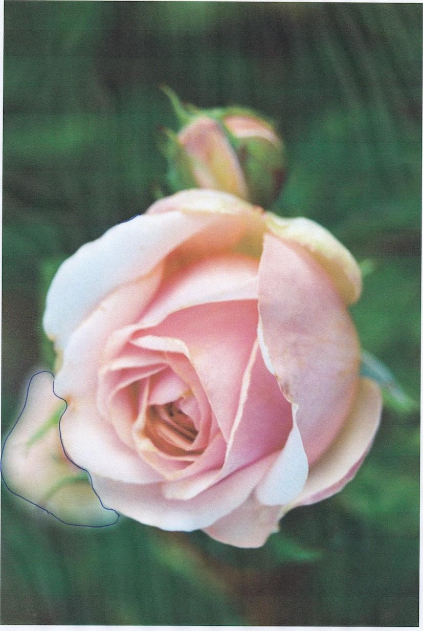 cor petale.jpg