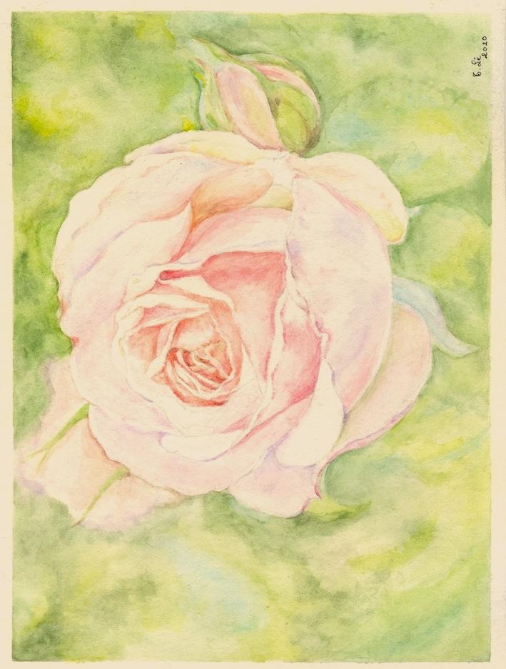 rose3 trinh.jpg