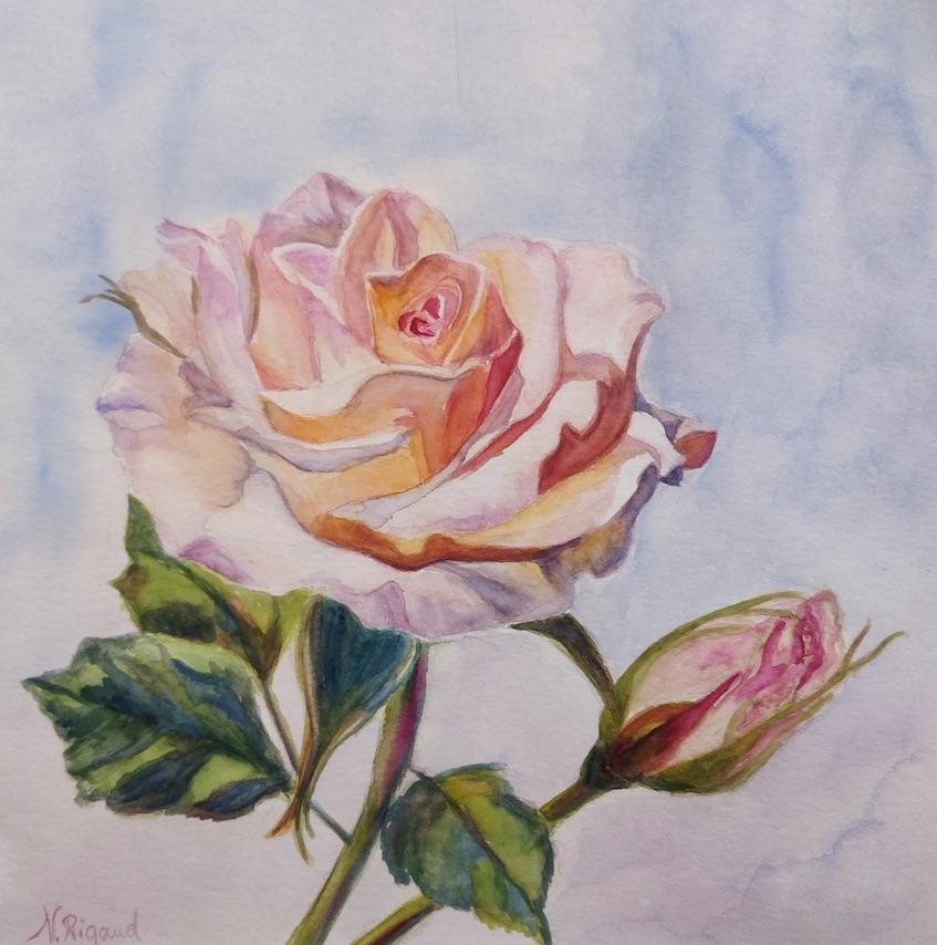 DEF rose natatcha