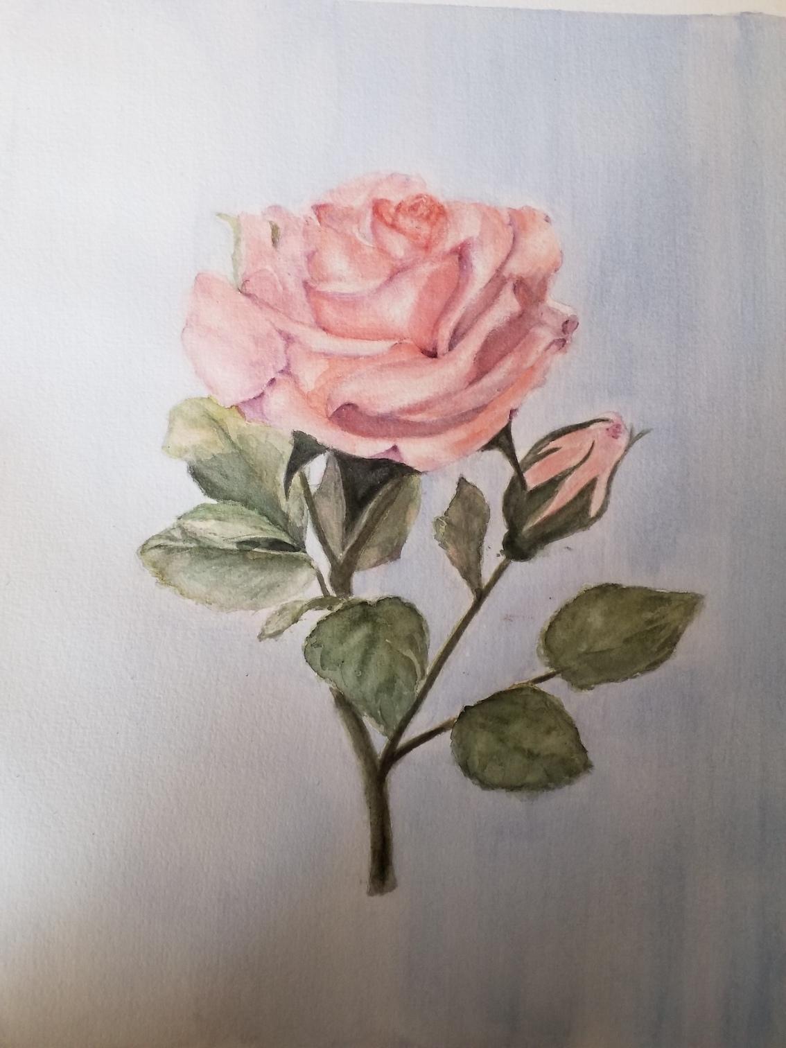 DEF rose sam