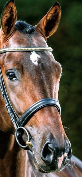 dessin tête cheval