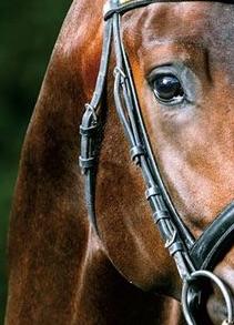 max cheval