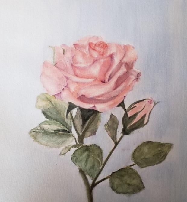 rose bas support sam