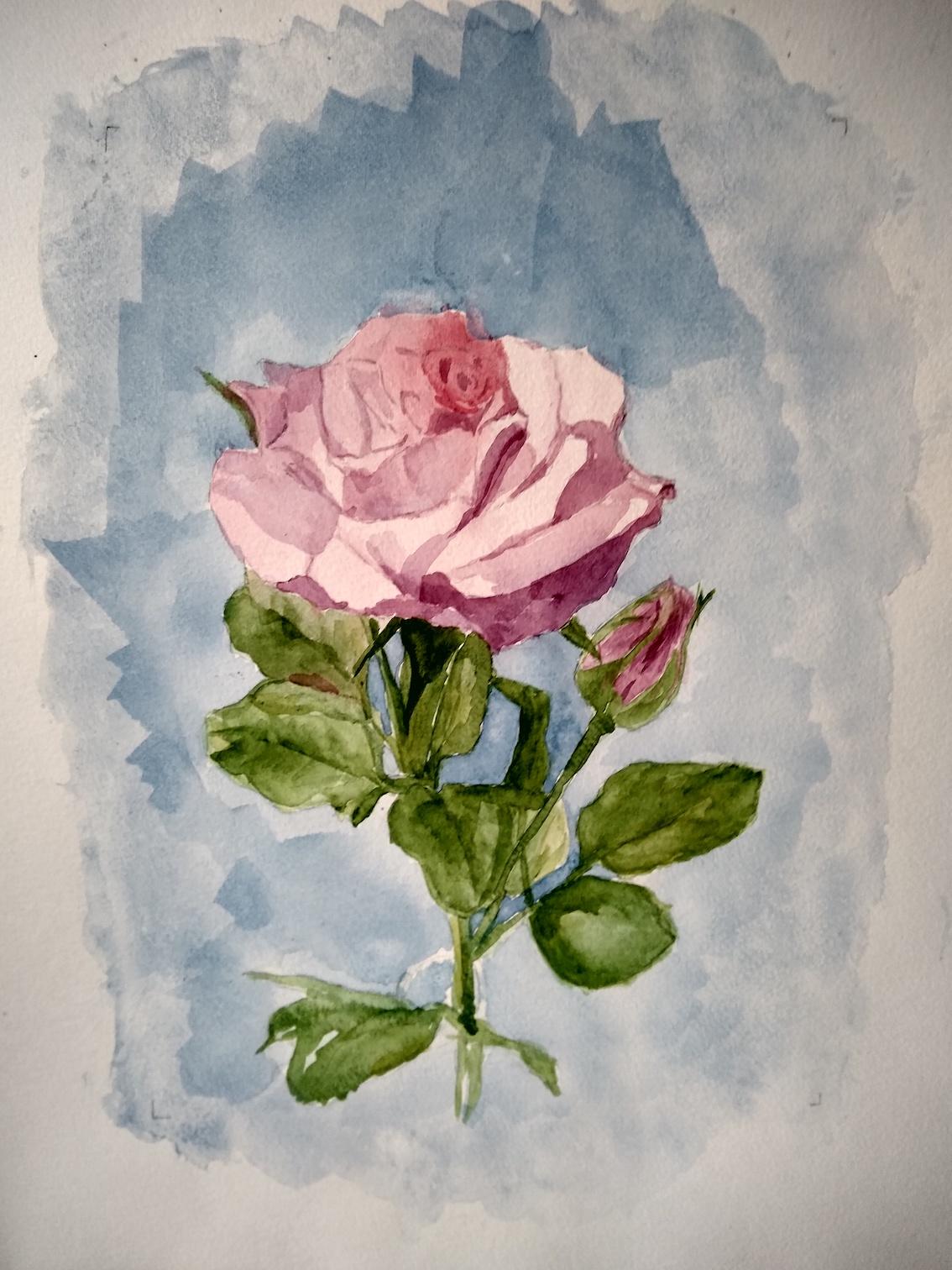 rose def