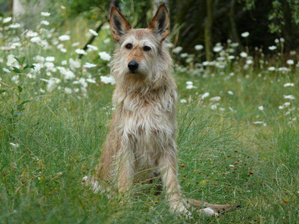 Noisette flox cherche apporte for Agility au jardin