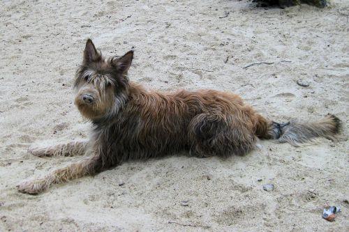 Mars 2012 - Dans les sables du Cul du Chien
