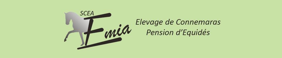 SCEA EMIA: elevage de poneys connemara et pension d'équidés