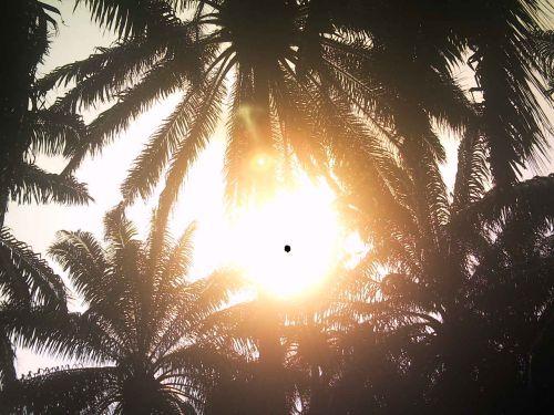 Images dans le soleil 4