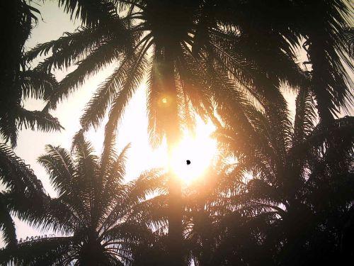 Images dans le soleil 5