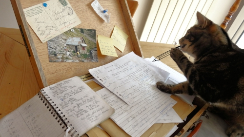 Pépito El Gato rédacteur en chef.jpg
