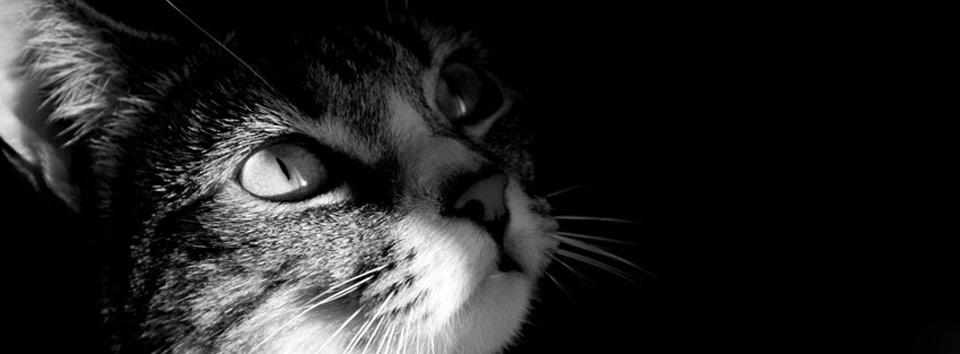catperl.blog4ever.com