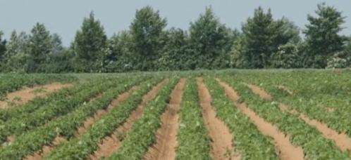Agroforesterie-en-Santerre-e1349426146653.jpg