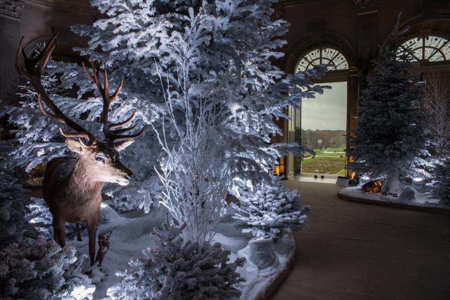Le cerf dans le grand salonVaux lumières Noël-cgel-3.jpg