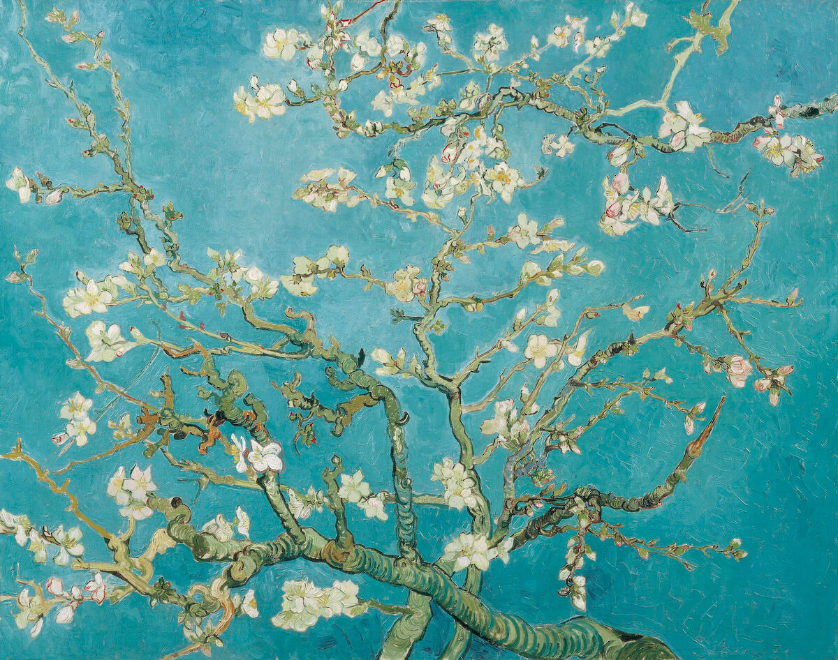 AmendierBranches_of_an_Almond_Tree_in_Blossom_F671.jpg
