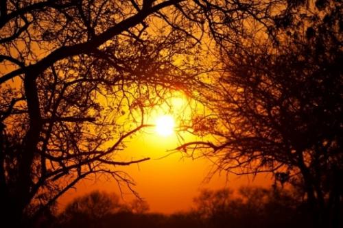 foret-lever-du-soleil_61-1830.jpg