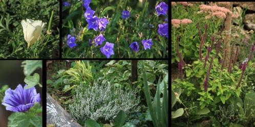 5 floraison tardives.jpg