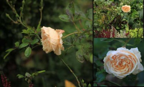 covent garden montage.jpg