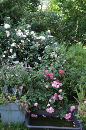 jardin du bas 05-07 3.jpg