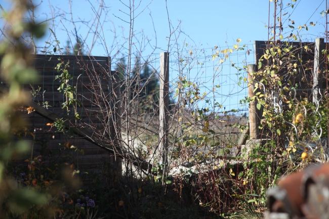 arbre 5.jpg