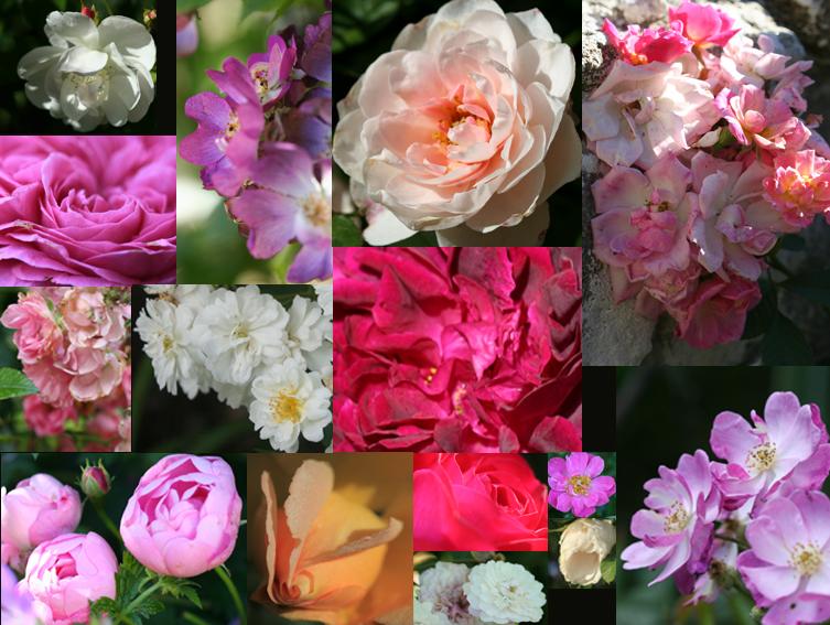 mosaïque roses.jpg