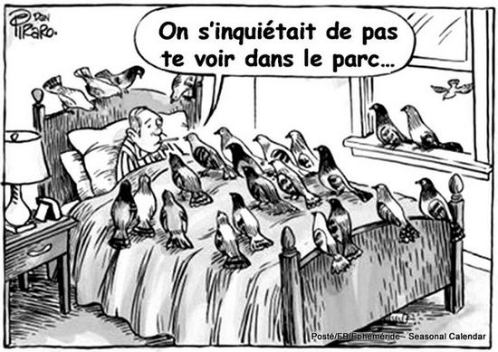 https://static.blog4ever.com/2012/07/706101/L--homme-aux-pigeons.png