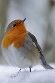 oiseau 5.jpeg