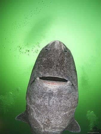 requingroenland  001.jpg